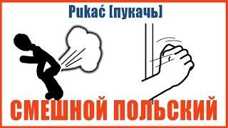 Смешной польский язык: ложные друзья переводчика #1