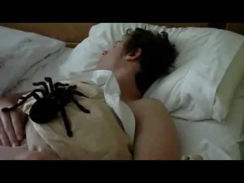 Гигантский паук-мутант. Адский розыгрыш смотреть онлайн