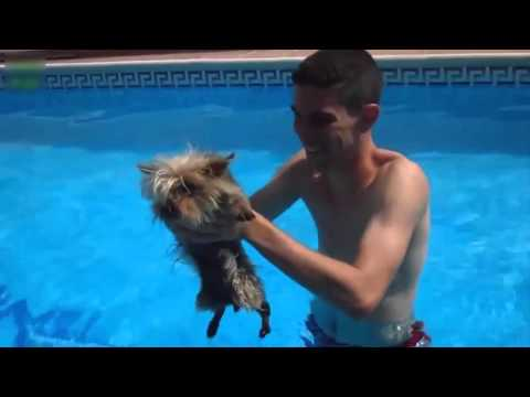 ★★★★★ Funny Dogs in Actions – The World's Most Funny Pet Video ★★★★★