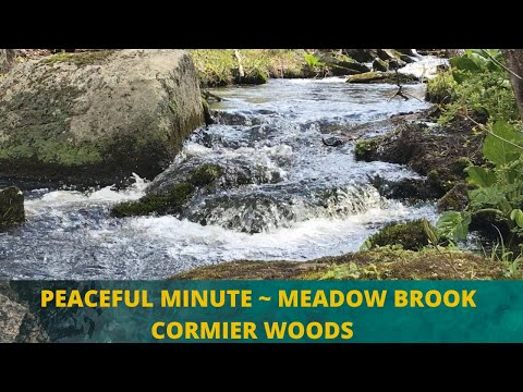 Peaceful Minute ~ Meadow Brook ~ Cormier Woods ~ Trustees of Reservation