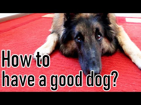 Advice on How to Have a Good Dog | 15 Random Dog Tricks