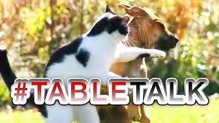 Animal Slap Fight on #TableTalk!