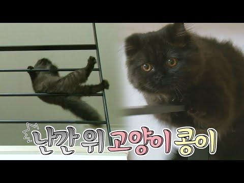 2층에서 떨어질 듯 말듯(?) 스릴 즐기는 고양이~ 결국..