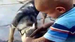 Мальчик кусает собаку