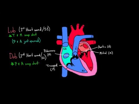 Normal First and Second Heart Sounds