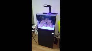 SCA 50 Gallon Cube