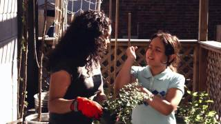 Container Gardening: Lingonberry