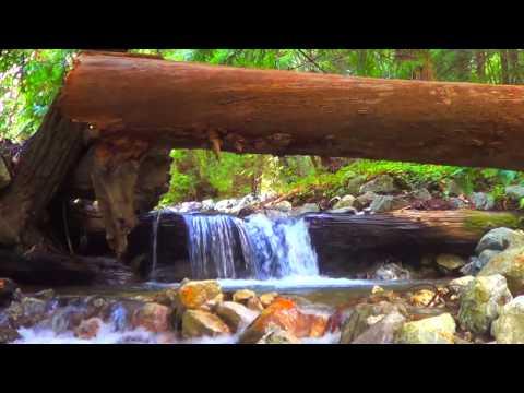 VERY POWERFUL! ★ Relaxing Nature Sounds ★ Healing Deep Sleep Isochronic Binaural Beat