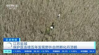 [正点财经]江苏盐城 保护区连续五年发现野外自然孵化丹顶鹤| CCTV财经 - YouTube