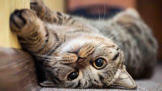 Funniest Animals ♥ Best Of The 2021 Cute Cat Videos #1
