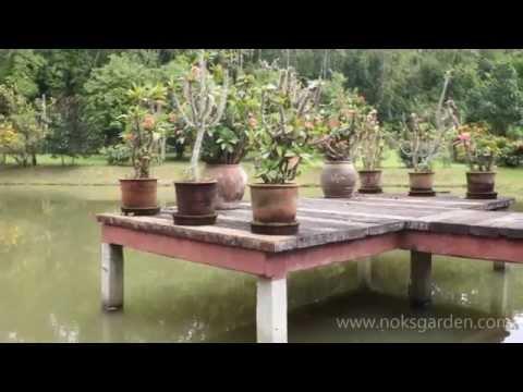 Nok's Garden Resort in Chiang Rai - Thailand