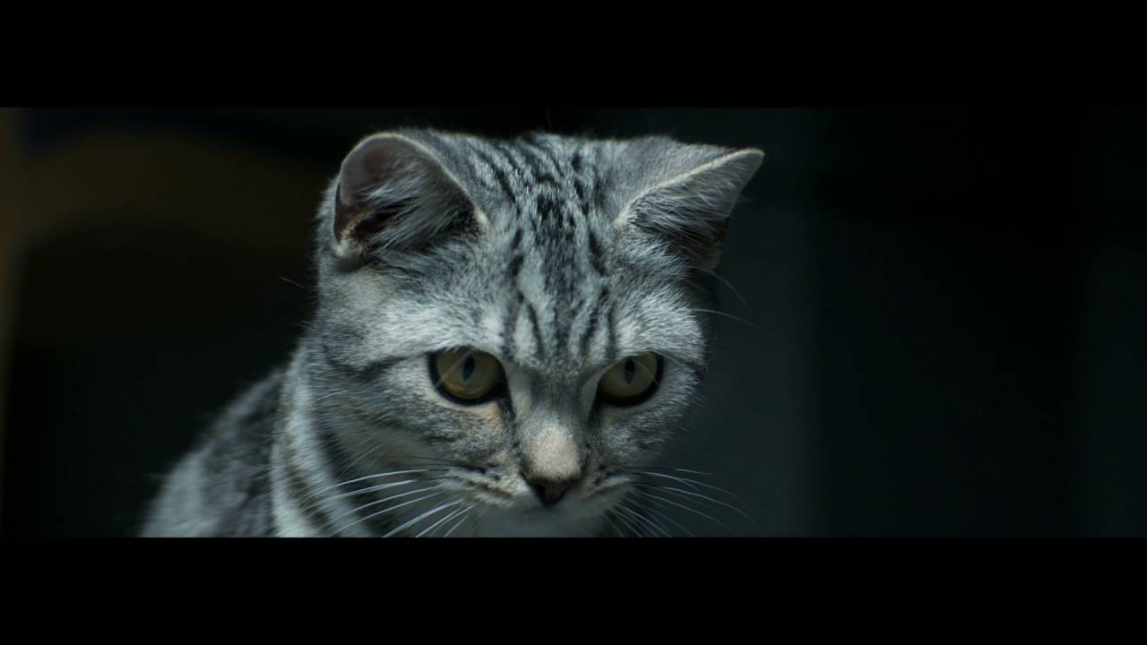 What Breed Of Cat Is In The Whiskas Advert