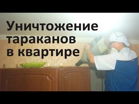Уничтожение тараканов в московской квартире