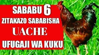 Sababu 6 Zitakazo Sababisha Uache UFUGAJI WA KUKU