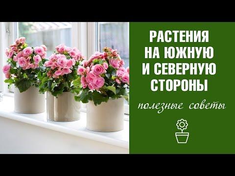 Луковичные комнатные цветы и растения Осень Фото