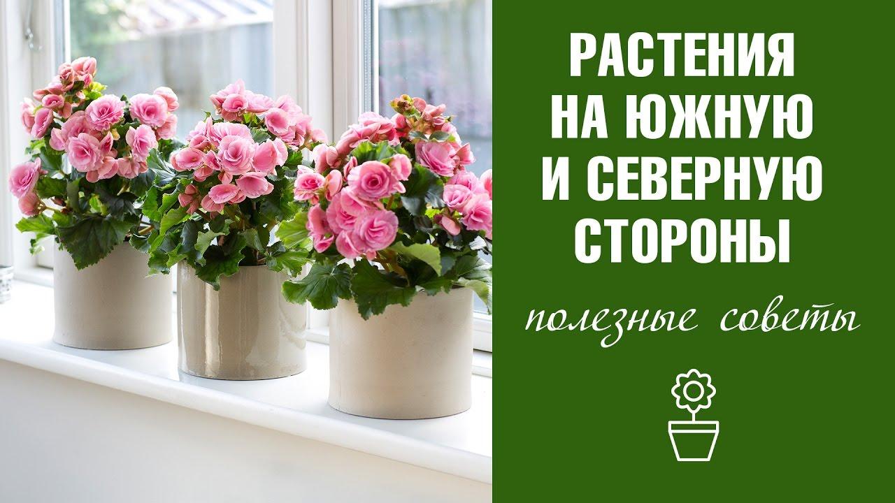 Продажа и покупка комнатных растений и комнатных цветов на крупнейшей площадке объявлений в беларуси. Разнообразные растения и цветы по низким ценам. Продавай и покупай на kufar!