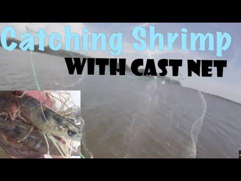 Catching Shrimp with Cast Net