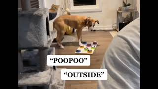 Dog Communicates with Human by Talking Buttons