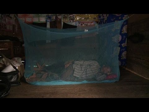 Download Malaria down but big challenges remain: WHO