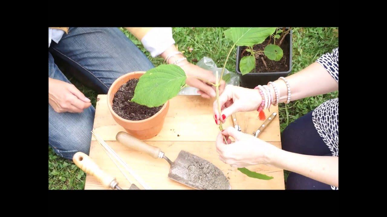 Ortensie Bianche Come Curarle come fare una talea di ortensia, 2 ladies in giardino