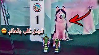 سافرت مع جاك للكويت وحضرنا مسابقه اجمل كلب 😍✌️