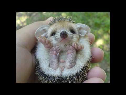 animals really cute