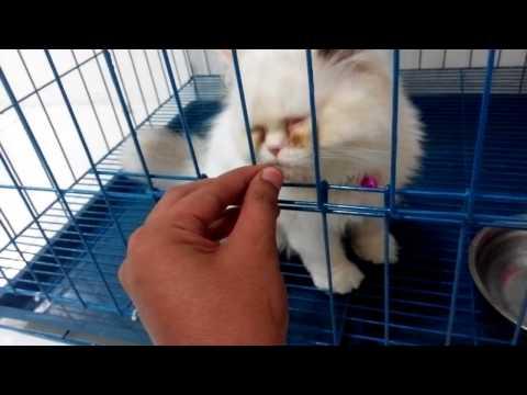 How To Apply Revolution For Cat Doovi