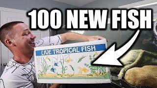 100-new-aquarium-fish