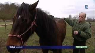 Découverte : un ostéopathe pour chevaux