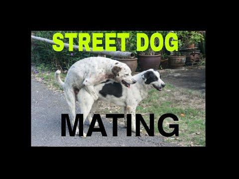 Dog meting.