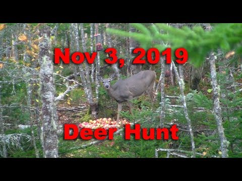 Nova Scotia Deer Hunt - Nov 3rd, 2019