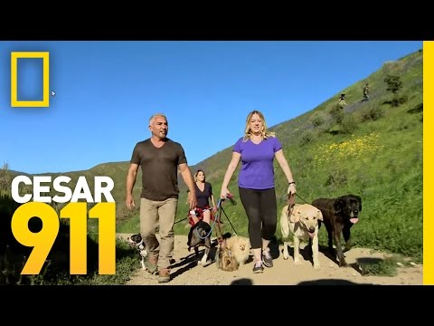 Leader of the Pack | Cesar 911