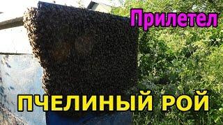 Как ловить пчелиный рой  - Самый лёгкий метод  -  пчеловодство(ПЧЕЛОВОДНАЯ ЭКИПИРОВКА И ИНСТРУМЕНТЫ для пчеловодства из КИТАЯ - http://ali.pub/rtens - бесплатная доставка! В этом..., 2015-06-21T10:09:52.000Z)
