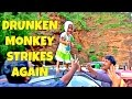 Drunken monkey strikes again | Funny Baby