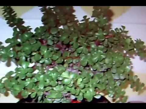 Feng shui para atraer m s dinero youtube for Plantas para tener en casa segun el feng shui