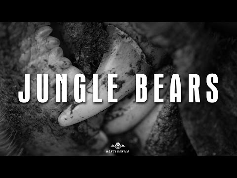JUNGLE BEARS - Backcountry Bear Hunt