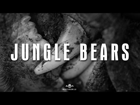 JUNGLE BEARS - Backcountry Bear Hunt