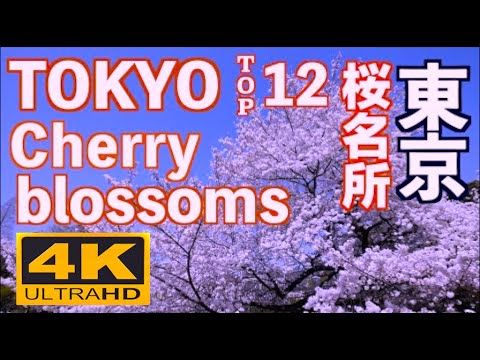 4K 東京の桜の名所 12Best Cherry Blossoms Tokyo 上野公園 千鳥ヶ淵 新宿御苑 花見 満開 目黒川 アークヒルズ 六本木ヒルズ 皇居 東京観光 SAKURA Hanami
