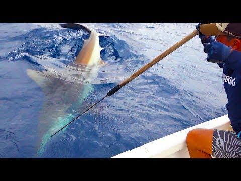 釣った魚を略奪する200kgのサメを退治せよ!【ハイサイ水族館 開園編 後編】