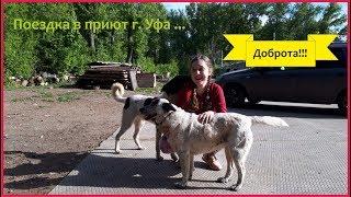 Поездка в приют г. Уфа/Приют для собак Доброта!