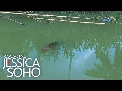 Kapuso Mo, Jessica Soho: Mga buwaya, beastmode sa Palawan?!
