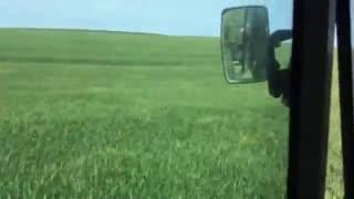 Çorlu Muratlı Buğday'da Yarasa Gübresi Uygulaması