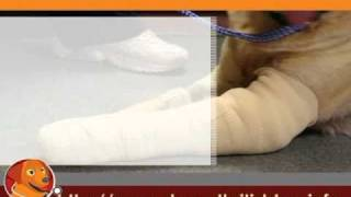 Dog Arthritis And Common Joint Problems - Front Legs Part 1.flv
