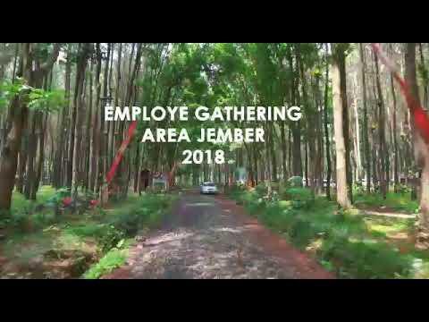 Outbound Banyuwangi 3 Employee Gathering Area Jember Wisata Pinus Songgon