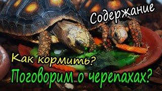 Уход за черепахами. Как содержать сухопутных черепах?