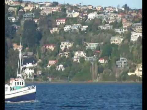 Cruising on the Otago Harbour New Zealand