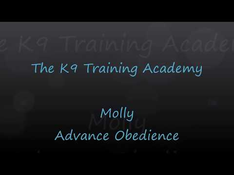 The K9 Training Academy - Molly with Advance Obedience