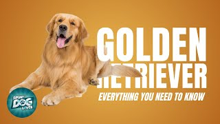 Golden Retriever Dog Breed Guide | Dogs 101  Possibly the Perfect Dog