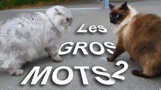 LES GROS MOTS 2 - PAROLE DE CHAT
