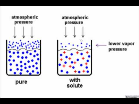 Colligative Properties -- Vapor Pressure Lowering